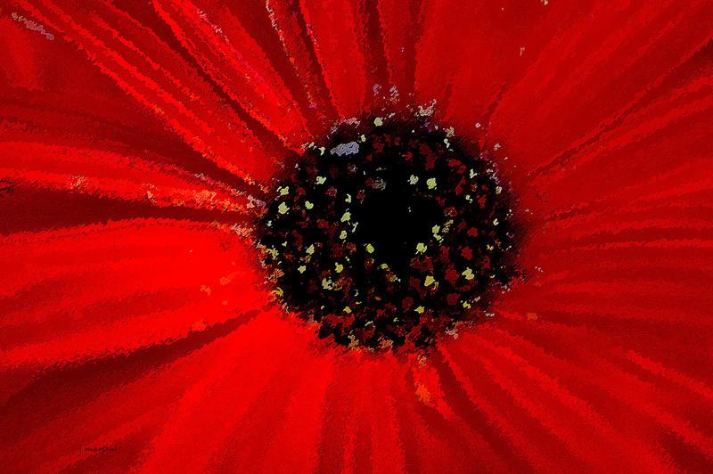 red center 4-17-2011.jpg
