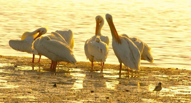 19-Sept North America Birds-9344.JPG