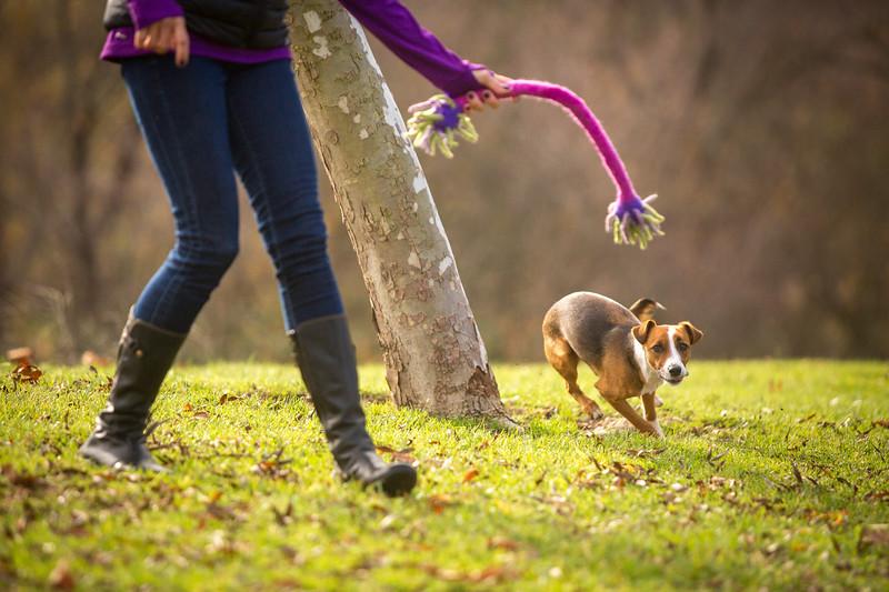 Dog Photos-Edited-26.jpg