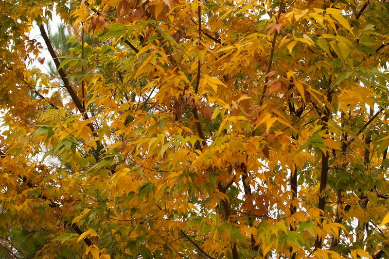20111010-2011-10-1011-09-4011139.jpg