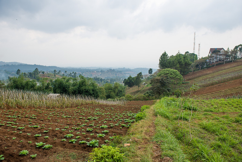 Hilly Farm Land