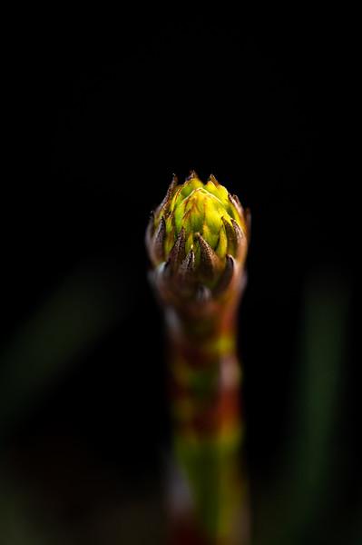 flower 030620-1846.jpg