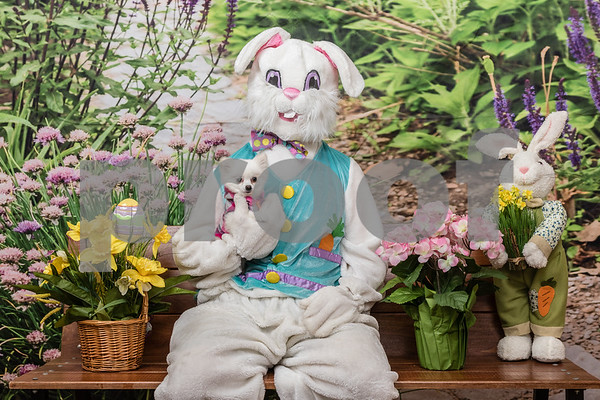 Easter Bunny & Pets 2018