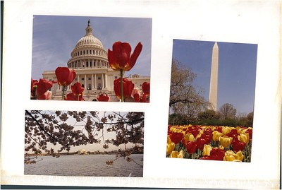 April 20-1989 DC Flowers - Cherry Blooms & Tulips