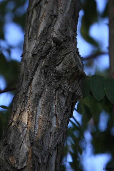 August 12th, 2009  My something peeling. This tree was loosing so much bark.