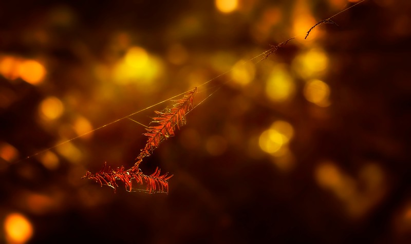 The Magic of Light-211.jpg
