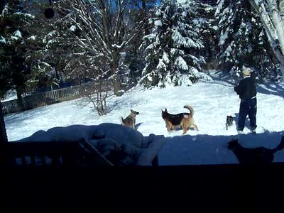 The dogs playing in the snow
