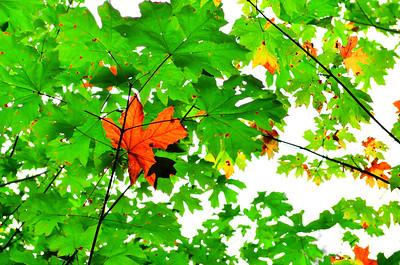 September 2012 Challenge: Summer to Fall