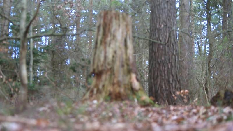 skoven.mp4