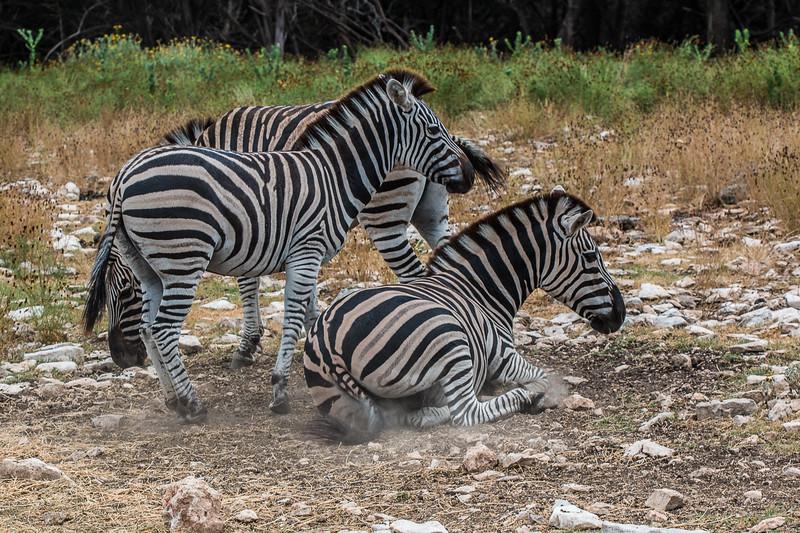 Wildlife Ranch-0461.jpg