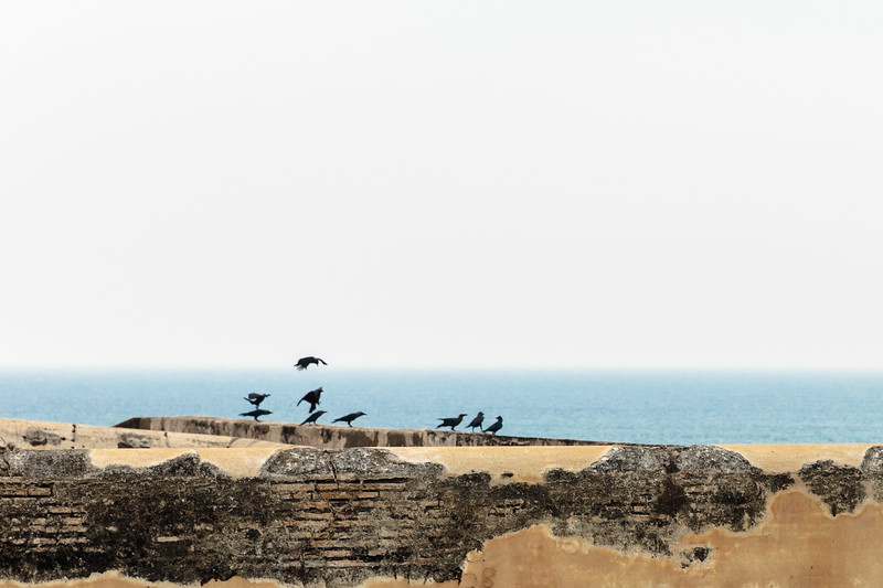 Birds on Galle's Wall