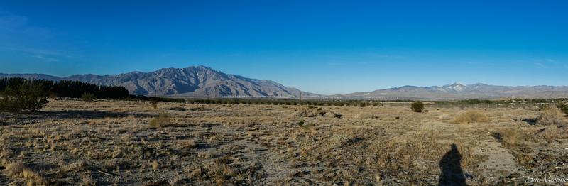 dog walk in the desert (5 of 13).jpg
