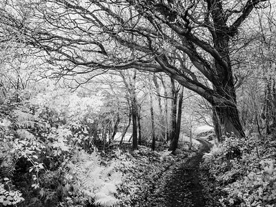 Corsley Infrared