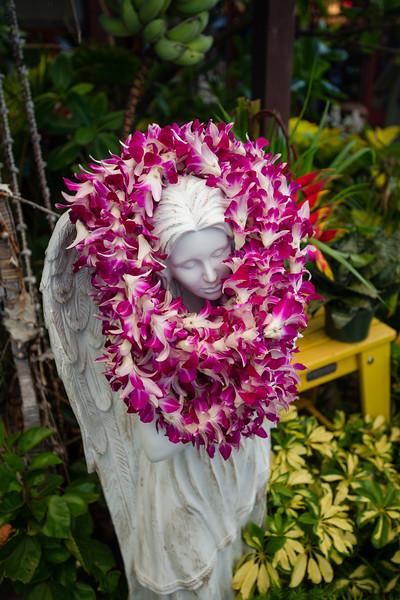 Hawaii2019-737.jpg