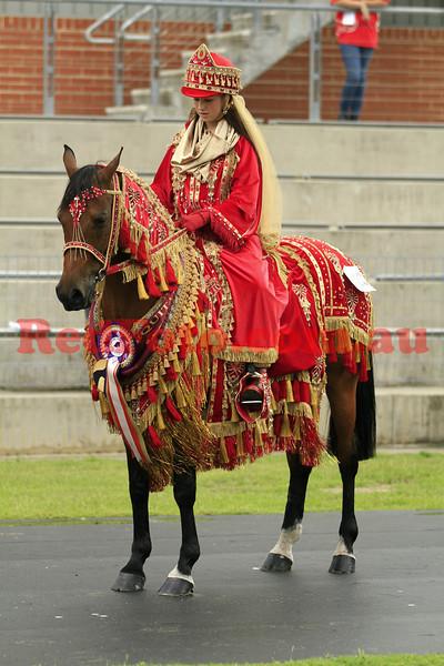 2011 11 10 Equitana Breed Parades