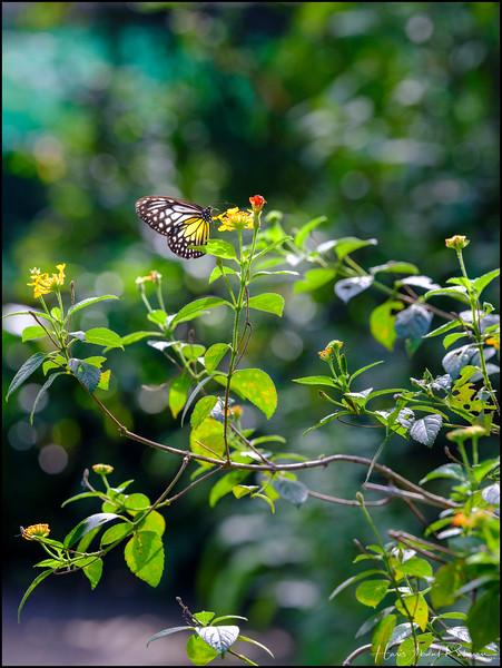 200104 KL Butterfly Park 33.jpg