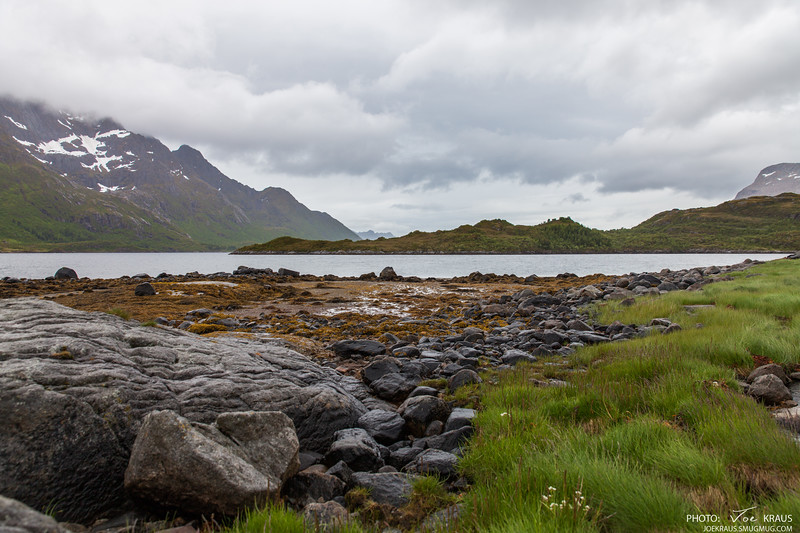 Rocks & Weeds (Sea Weeds)