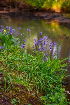 Spring by Black Devon Woodland