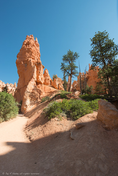 Rock formations on the valley floor of Bryce Canyon.  This is on the Navajo trail.