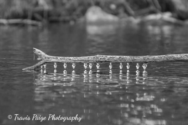 Grafton Pond in November