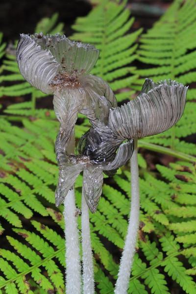 Delicate Mushrooms(water damaged)- Grams Regional Park