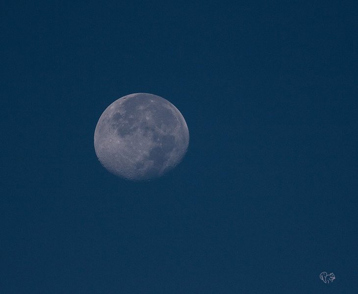 Oh why not, shoot'n the morning moon:-)