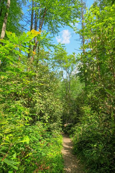 Bradley Creek Trail -- 2,380'