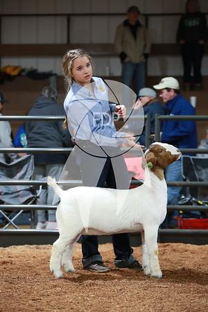 Goat Ring Shots