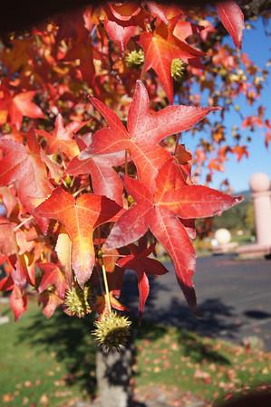 Nap November fall colors