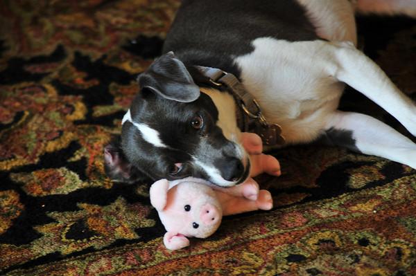 Maura and Piggy- April 2011