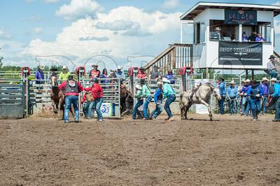 Wild Horse Racing