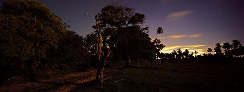 Dead Tree and Moon.jpg