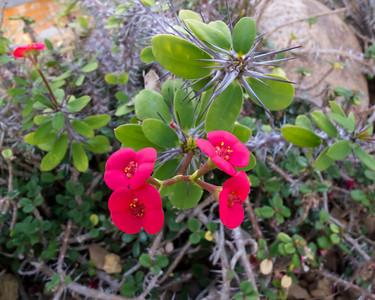 Arid House - Catalog of Euphorbiaceae (new sorting)