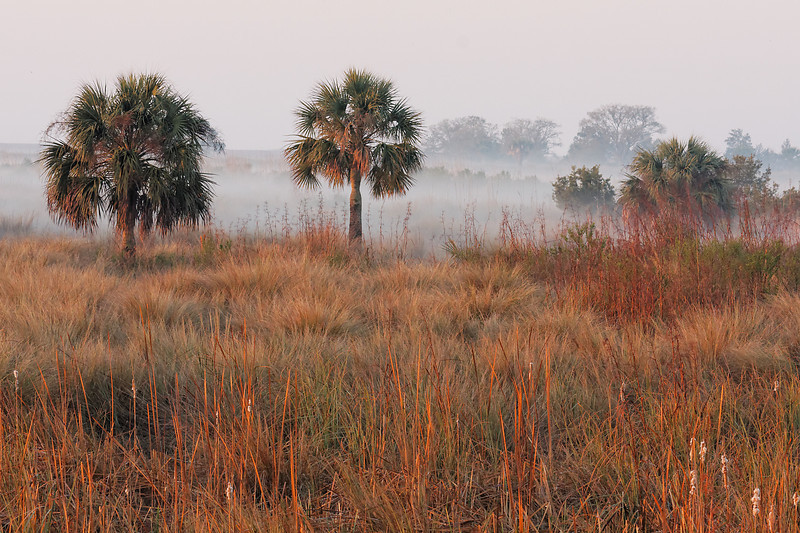Fog, Palms, and Grasses - Fog rolls in over the ridges
