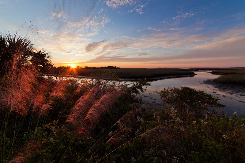 Muhly Grasses at Sunset - Sunlight warms the pink grasses