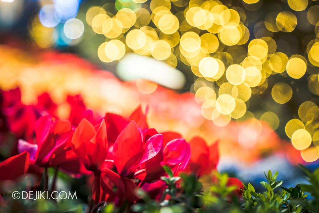 Gardens by the Bay - Merry Medley floral display - bokeh
