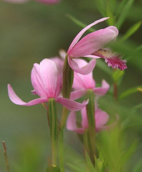 20130627_IMG_0005161 Flower.JPG