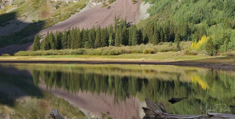 Pines and Aspen reflecting at Crater Lake
