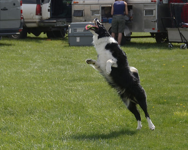Salt Lake Dog Show May 2011 misc