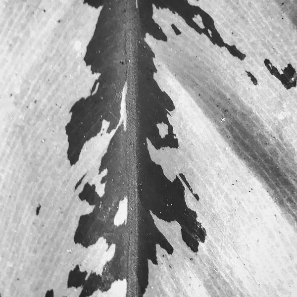 IMG_1954.JPG
