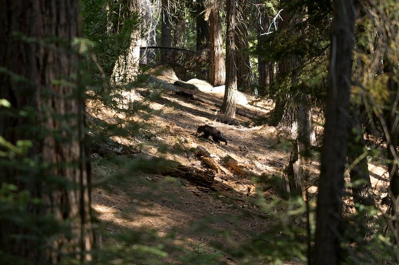 Sequoia_0667.jpg