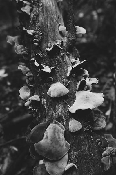 Fungi Rising