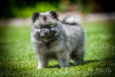Kathy Gray Pups!