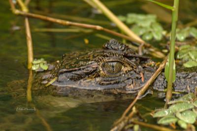 Costa Rica - Tortuguero National Park