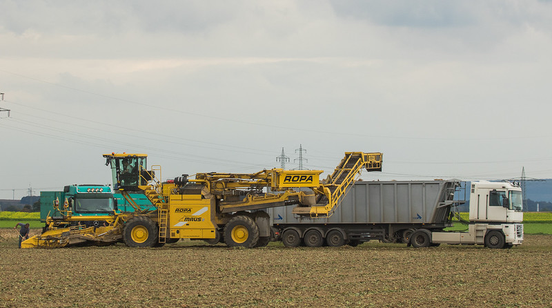 Ropa Maus 5 loading sugarbeets near Linnich.