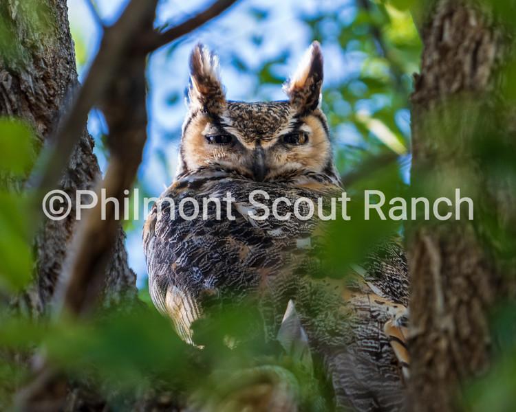 HMAnimals_2019_Animals and Wildlife_ShawnTunink_Mamma Owl_Camping Headquarters_751.jpg
