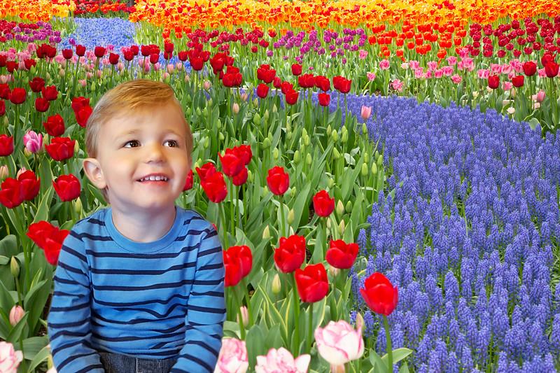JWS_7869Beckett in tulip garden.jpg
