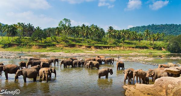 Sri Lanka Trip 2012