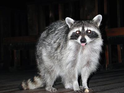 Raccoons, Skunks, Squirrels, Other