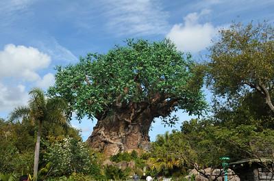 2012 Disney Photos